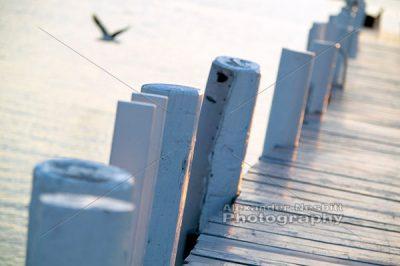 Pier Pilings 1