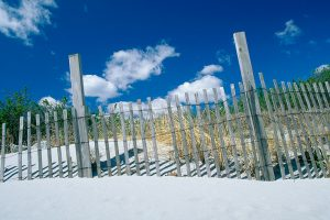 Dune fences at Gooseberry