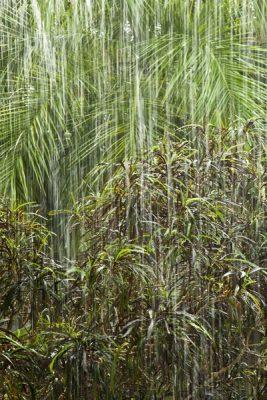 Rain streaks down in  the garden, Dominican Republic