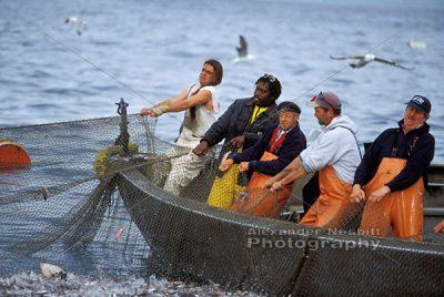 Trap Fishing 1