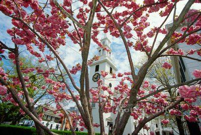 Trinity church - Cherry blossoms 1
