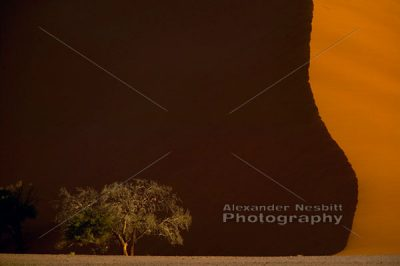Shadow of a Dune 1