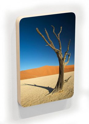 Timeless Tree - photoblock 1