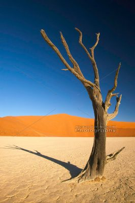 Lone Tree - Namibia 1
