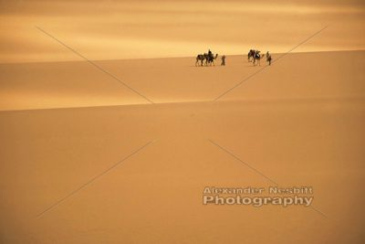 Desert Trek 1