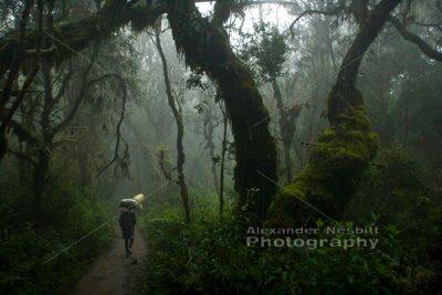 kili rainforest 1