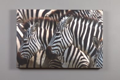 image of zebras printed on canvas