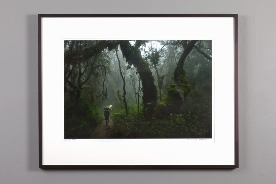 "framed 13x20 print of the ""Kilimanjaro Jungle"" by Alexander Nesbitt"