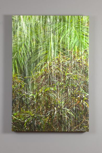 24x36 canvas print of heavy rain in a bamboo grove