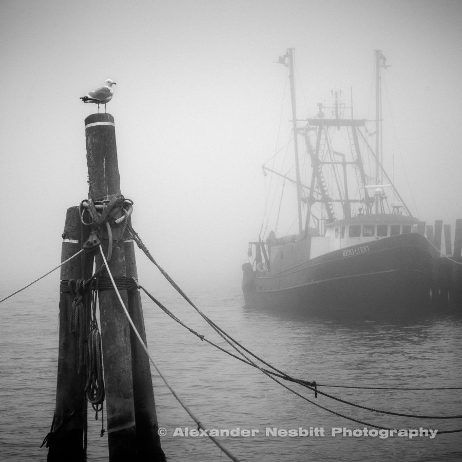 resilient fishing boat emerges from the fog