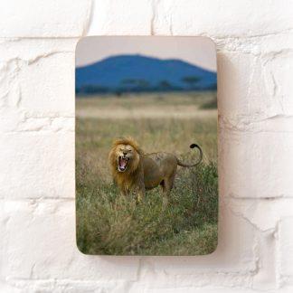 Lion in the Serengeti photo block