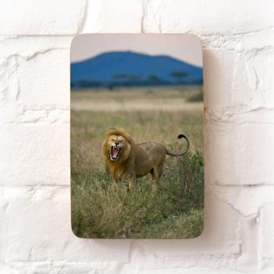 Lion in the Serengeti photo block