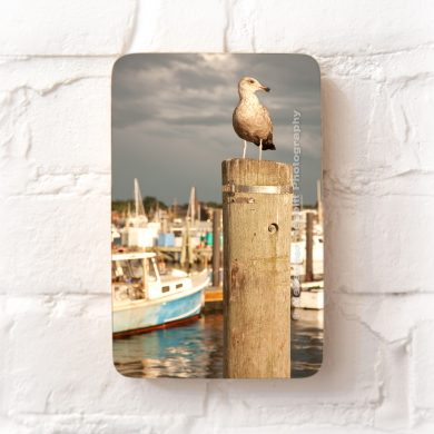 Newport gull on a piling