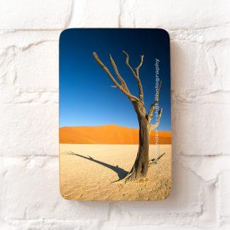 A loan tree emerges from the 'Deadvlei' salt pan near Sossusvlei, Namibia