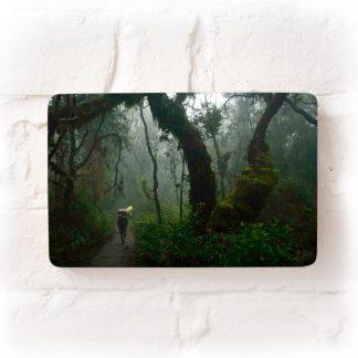 Porter in the rainforest climbing Mt. Kilimanjaro