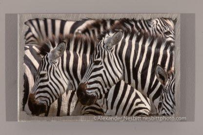 zebras in the Serengeti - fine art photograph by Alexander Nesbitt